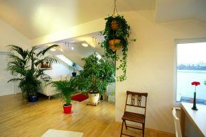 Rokitanskygasse, Wohnzimmer, Fertigparkett, Eichenfertigparkett, Pflanzen, Essbereich, ( Hier wurde effektvoll mit ein paar Pflanzen eine Raumtrennung zwischen Ess- und Wohnbereich geschaffen.)